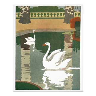 Pair of Swans Reflected in the Water Photographic Print