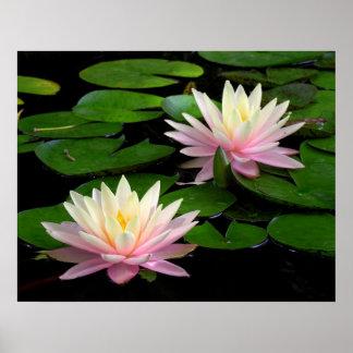 Pair of Water Lilies Print