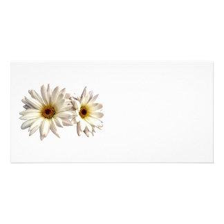 Pair of White Daisies Custom Photo Card