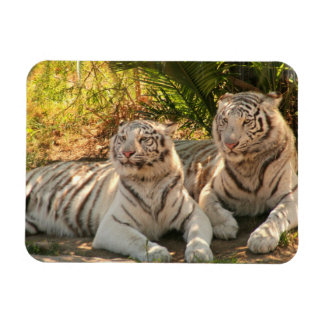 Pair of White Tigers Flexible Magnet