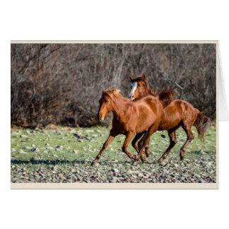 Pair of Wild Horses Card
