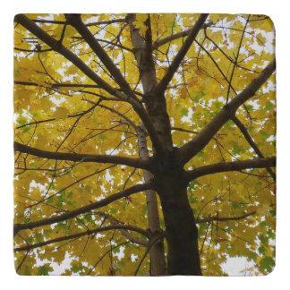 Pair of Yellow Maple Trees Autumn Nature Trivet