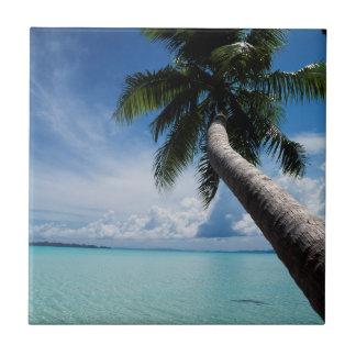 Palau, Micronesia, Palm tree at Palau Lagoon Small Square Tile