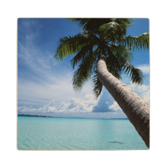 Palau, Micronesia, Palm tree at Palau Lagoon Wood Coaster