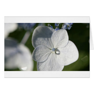 Pale blue flower with rain drop greeting card