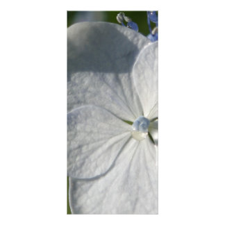 Pale blue flower with rain drop full color rack card