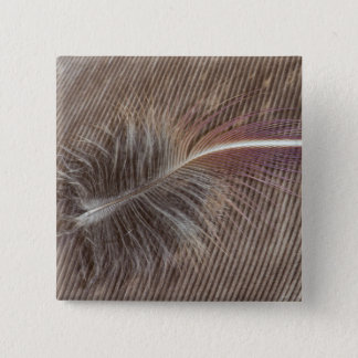 Pale Brown Feather Still Life 15 Cm Square Badge