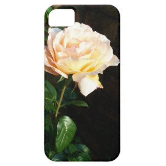Pale Creamy Pink Dreaming Spires Rose Barely There iPhone 5 Case