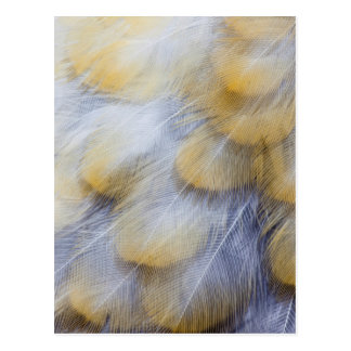 Pale Golden Thrush Feather Abstract Postcard
