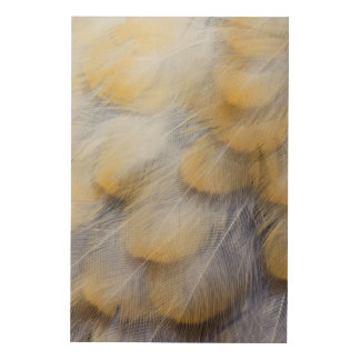 Pale Golden Thrush Feather Abstract Wood Wall Decor