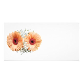 Pale Orange Gerbera Daisies and Stephanotis Picture Card