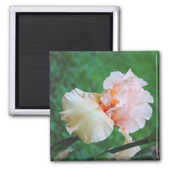 Pale Peach Iris Magnet