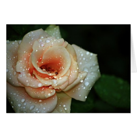 Pale Peach Rose Note Card