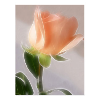 Pale Pink Cut Rose 1 Angelic Post Cards