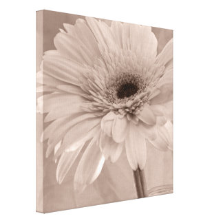 Pale Pink Gerber Daisy Wrapped Canvas Print
