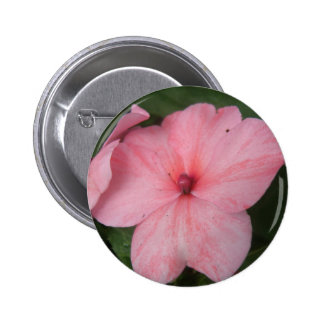 Pale Pink Impatiens Flower Button