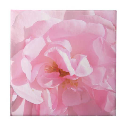 pale pink rose petals small square tile