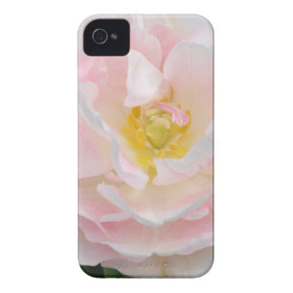 Pale pink tulip flower iPhone 4 Case-Mate case