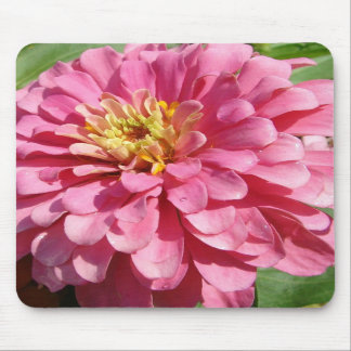 Pale Pink Zinnia Mouse Pads