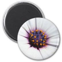 Pale Purple Daisy 6 Cm Round Magnet