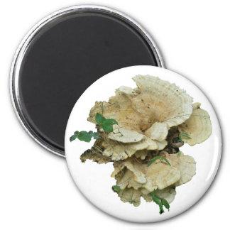 Pale Shelf Fungus Coordinating Items 6 Cm Round Magnet
