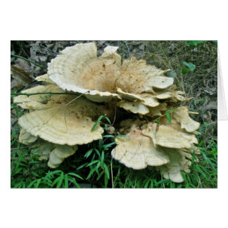 Pale Shelf Fungus Coordinating Items Greeting Card