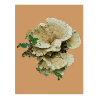 Pale Shelf Fungus Coordinating Items Postcards