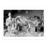 Paleontology Scientist Baby Dinosaur Vintage Post Cards