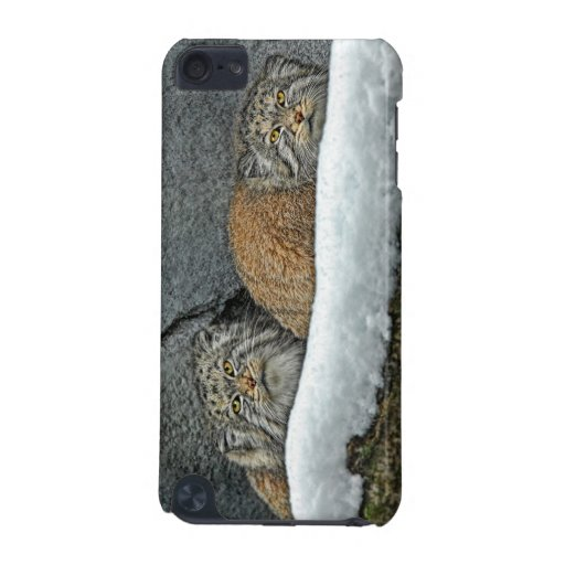 Pallas' Cats in Snow Wild Species iPod Touch (5th Generation) Case