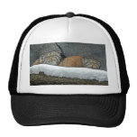 Pallas Cats Snow Ball Cap