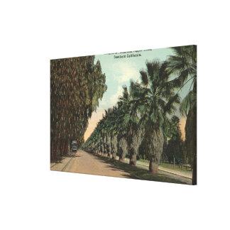 Palm and Pepper Trees Alongside Avenue Canvas Prints