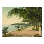 Palm Beach 1898 vintage Florida scene Post Card