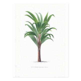 Palm collection - Drawing III Postcard