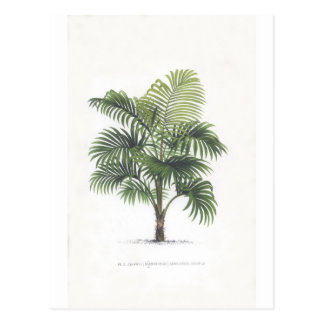 Palm drawings Collection Postcard