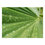 Palm Frond Posters