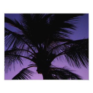 Palm Frond Silhouette Art Photo