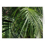 Palm Fronds Fine Art Nature Photography Greeting Cards