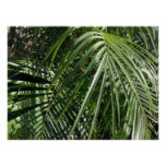 Palm Fronds Fine Art Nature Photography Posters