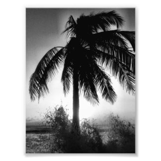 Palm In A Storm Photo Print