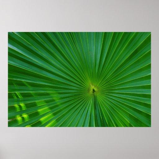Palm leaf close-up poster