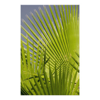 Palm Leaf Personalized Flyer
