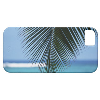 Palm leaf iPhone 5 covers