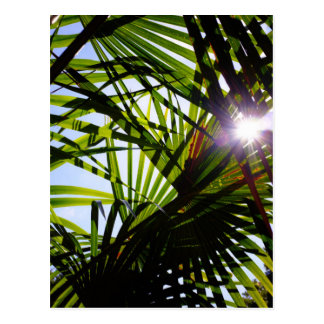 Palm leaves postcard