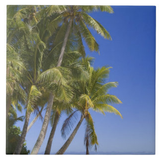 Palm lined beach Cook Islands 3 Large Square Tile