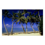 Palm lined beach Cook Islands 4 Poster