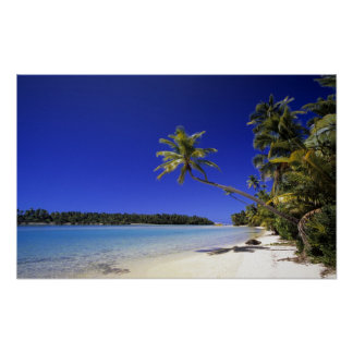 Palm lined beach Cook Islands 5 Poster