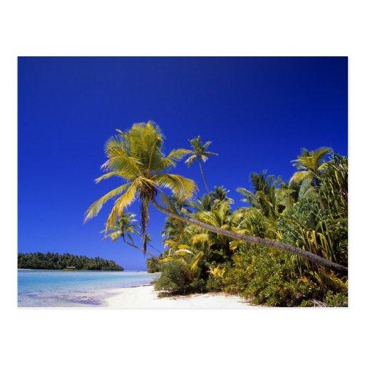 Palm lined beach Cook Islands 7 Postcard