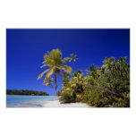 Palm lined beach Cook Islands 7 Poster
