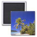 Palm lined beach Cook Islands 7 Square Magnet