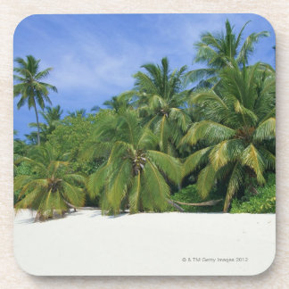 Palm Tree 3 Coaster